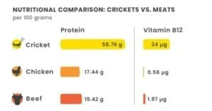 chippin-crickets-vs-meat-protein