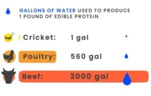 chippin-crickets-vs-meat-water