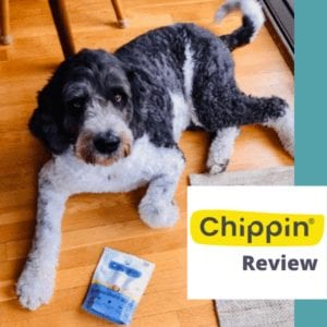 chippin-review
